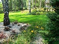 Ogród w okolicach Łomianek - leśny charakter