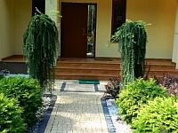 Wejście do domu - piękne modrzewie w odmianie przewisającej